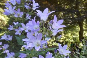 photo nature 2