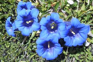 photo nature 6